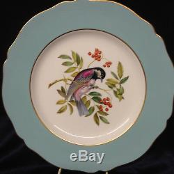 Spode Y6919 Dinner Plate 10 1/2 Light Blue Band Chestnut Backed Chickadee Bird